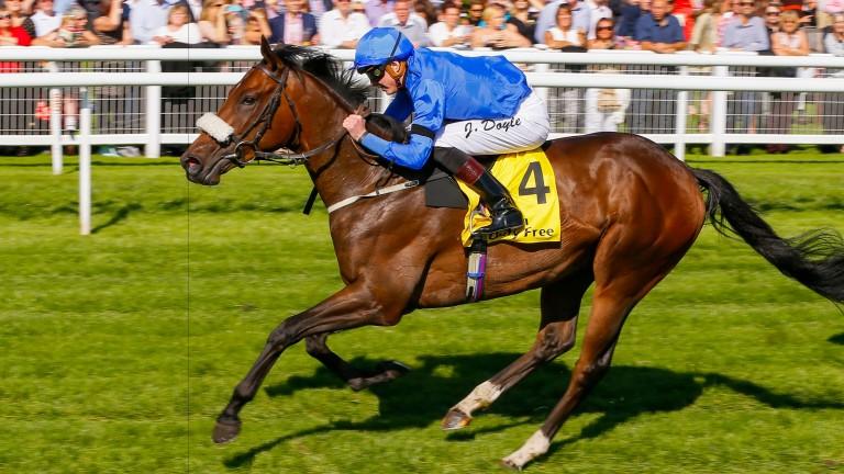 Ribchester: Richard Fahey's star miler is set for the Dubai Turf