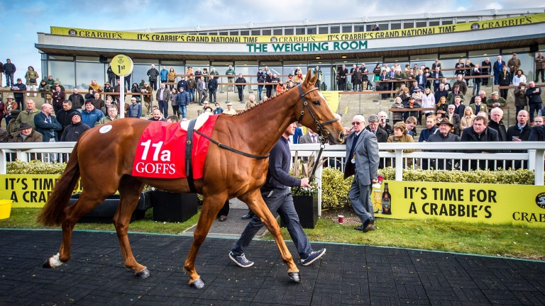 Samcro: festival hero was the star of the first Aintree Sale