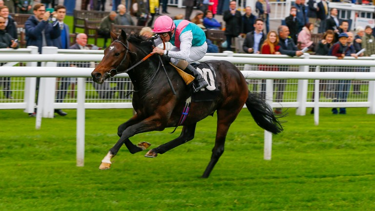 Midterm made an impressive start to his career at Newbury where his dam's second foal makes her debut on Friday