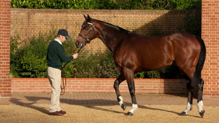Frankel: has sired Classic trial winners Cunco and Eminent in recent weeks