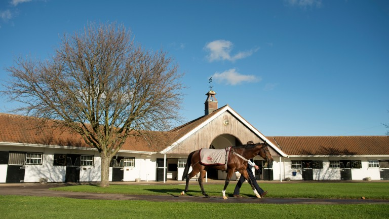 National Stud: will welcome four new sires for 2018 breeding season