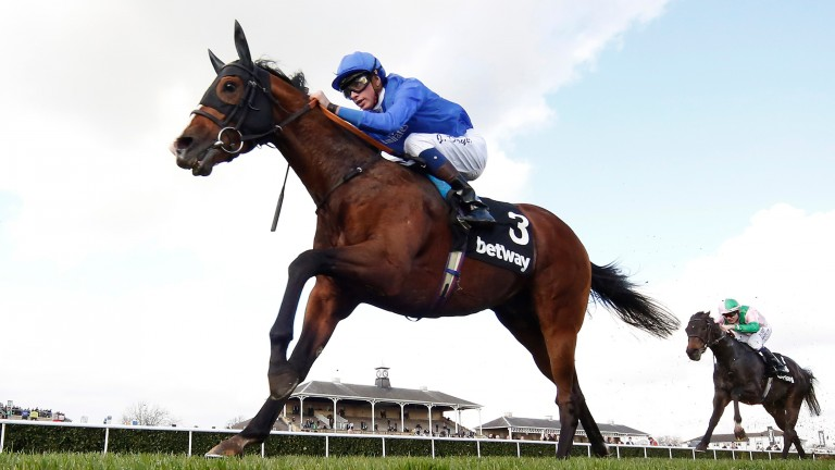 Belardo: Ballylinch Stud will offer a brother to the Group 1 winner in Deauville this weekend