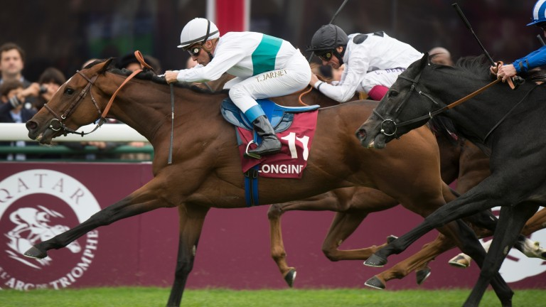 We Are (white and green hoop) is one of 20 top-flight winners for her sire Dansili