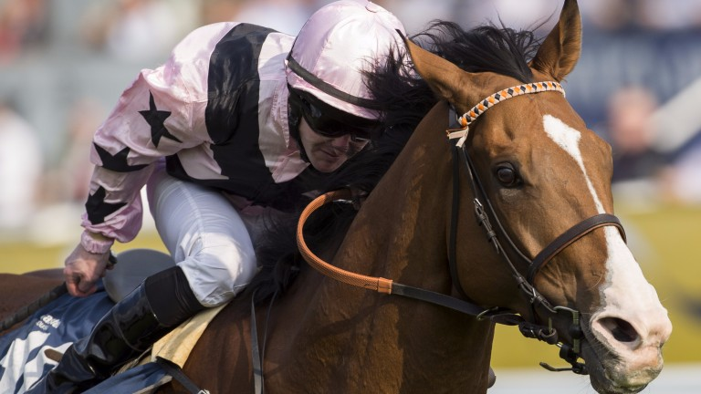 Hoof It: star sprinter for Mick Easterby