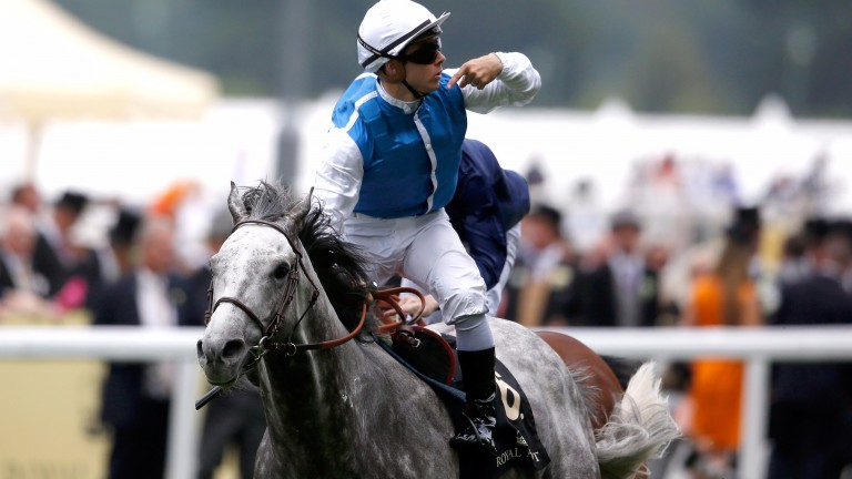 Solow will spend his retirement at the Wertheimers' Haras de Saint-Leonard in Normandy
