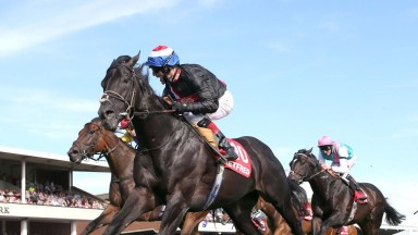 Society Rock: won twice at the highest level for James Fanshawe