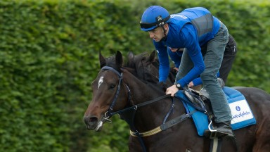 Godolphin's Holler canters on the Limekilns Thursday morning ahead of his attempt on the Diamond Jubillee Stakes at Ascot