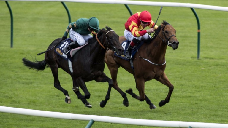Only Mine: has strong claims in the Group 3 TRM Ballyogan Stakes at the Curragh for Joseph Murphy