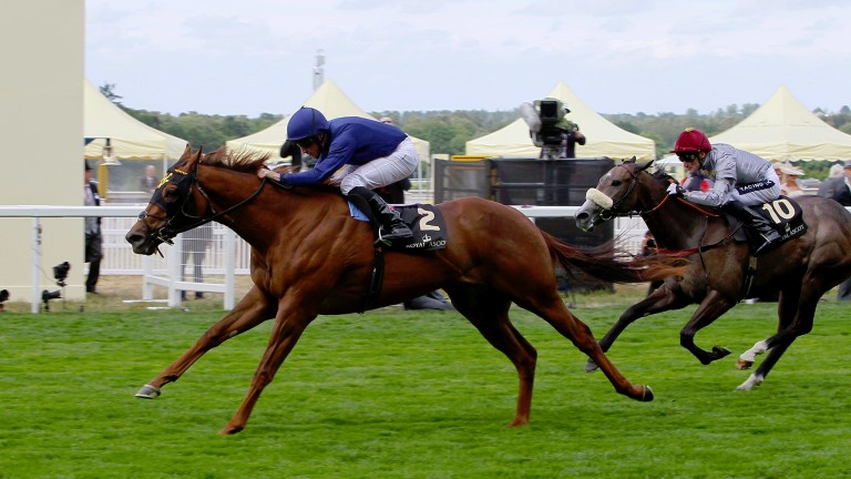 Acapulco (blue): will be aimed at Royal Ascot again this year