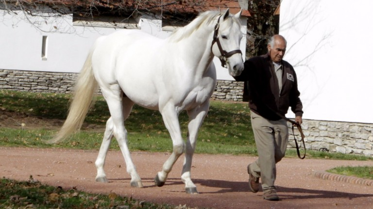Tapit: most expensive advertised sire in North America