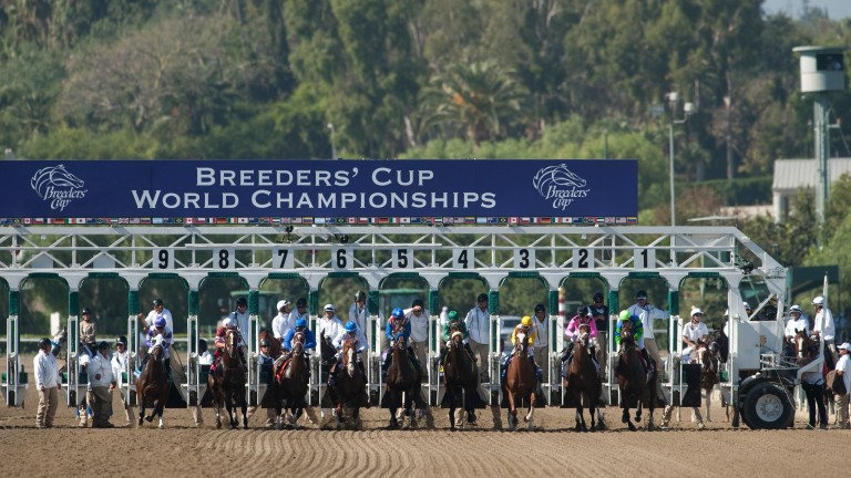 1m Juvenile Turf Sprint Added To Breeders Cup Menu Horse Racing News Racing Post