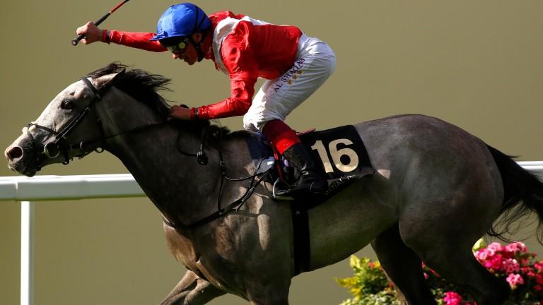 Persuasive: winner at Royal Ascot last season