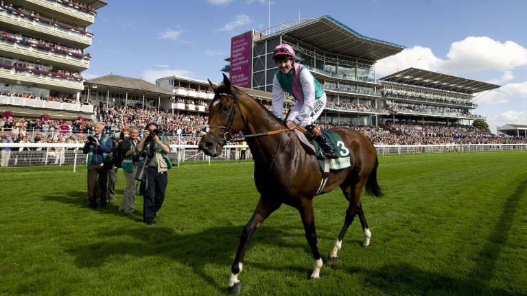 Frankel: not a bad horse to be around!