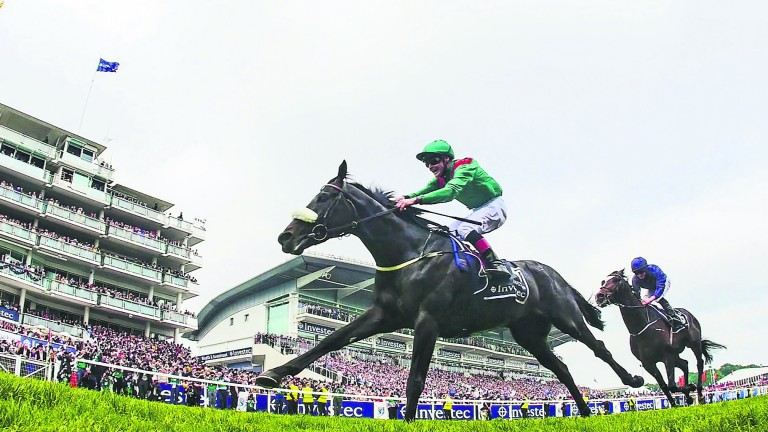 Harzand (green) emulated sire by winning the Derby