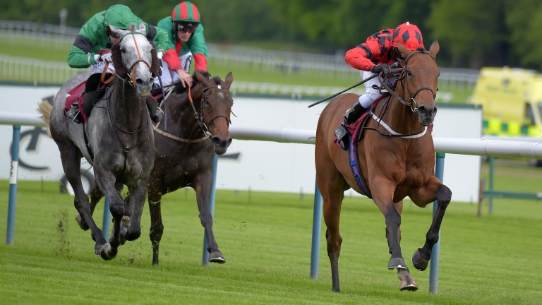 My Reward (right): might be able to dictate at Pontefract