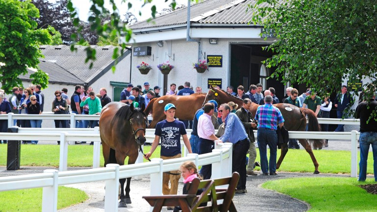 Tattersalls Ireland: 205 lots to go under the hammer Friday