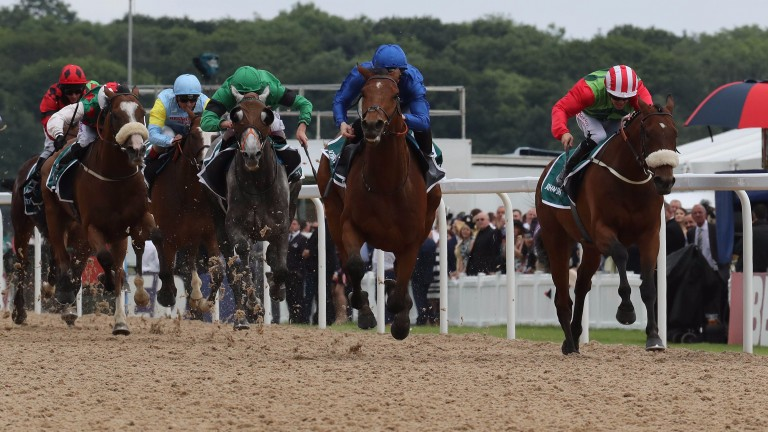 Antiquarium (blue): chasing down Seamour in the 2016 Northumberland Plate