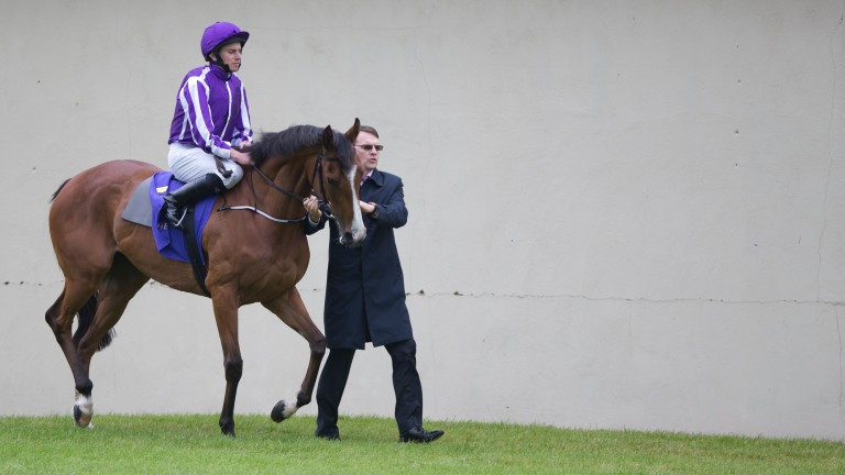 Minding: lit up last season when her victories included the 1,000 Guineas, Oaks and Queen Elizabeth II Stakes