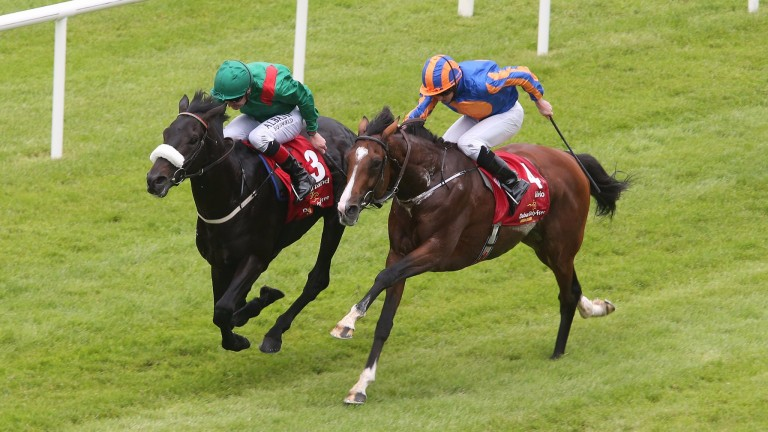 Harzand (left): completed the Anglo-Irish Derby double with ground conditions in his favour