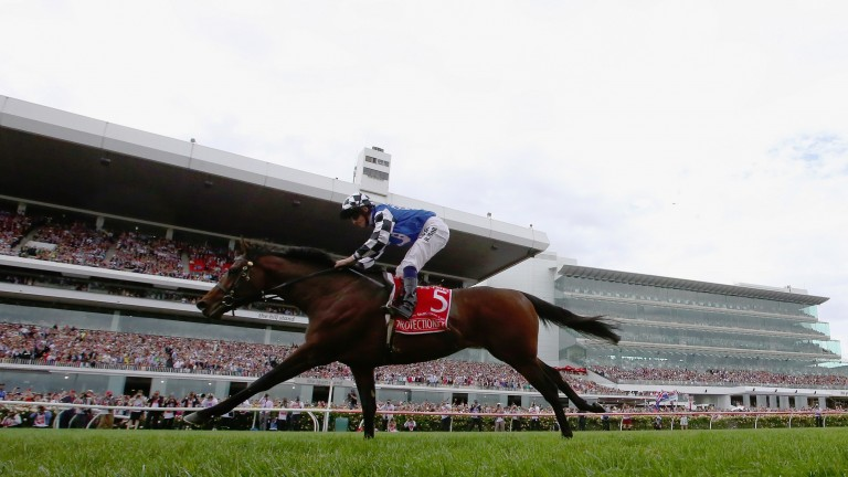 Protectionist: the 2014 Melbourne Cup was represented by his first runners this year