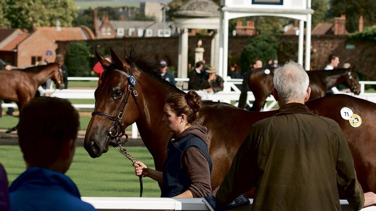 Tattersalls: two-day February Sale begins on Thursday