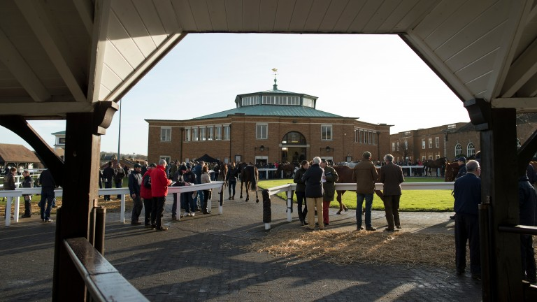 Tattersalls: First session of the Craven Sale starts at on Tuesday evening