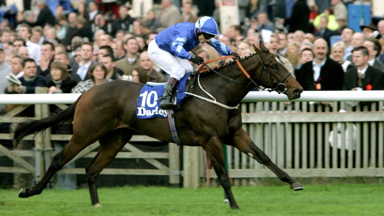 'The best horse I ever trained': Shamardal wins the Dewhurst Stakes under Kevin Darley in 2004 on his final start for Mark Johnston before joining Godolphin