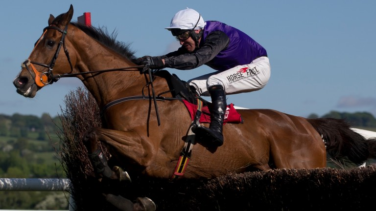 Mr Fiftyone: was the recipient of a positive bulletin from trainer Jessica Harrington