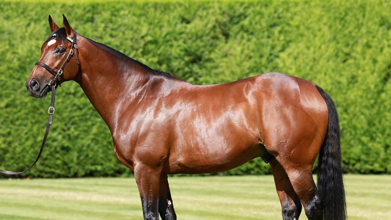 Frankel has supplied six stakes winners worldwide from his first crop