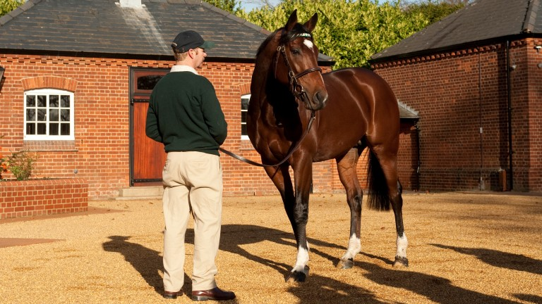 Frankel at Banstead Manor Stud