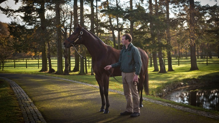 Sea The Stars: is the sire of Group 3 winner Quasillo