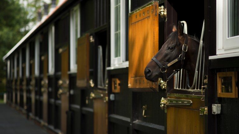 Sidestep observes proceedings from his box at Dalham Hall