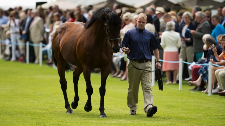 Dubawi: stands at Dalham Hall Stud at a fee of £250,000