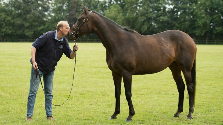 Ouija Board with her former trainer Ed Dunlop at Stanley House Stud
