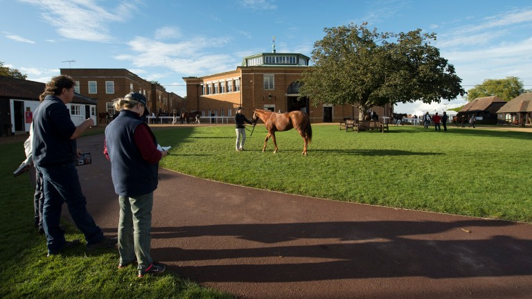Tattersalls: more exciting lots up for grabs on Wednesday evening