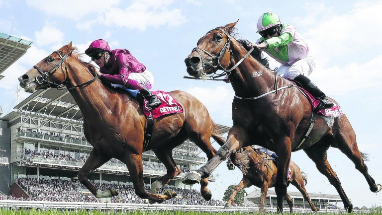 Wings Of Desire (left): will be entered in the Vodacom Durban July Handicap by connections