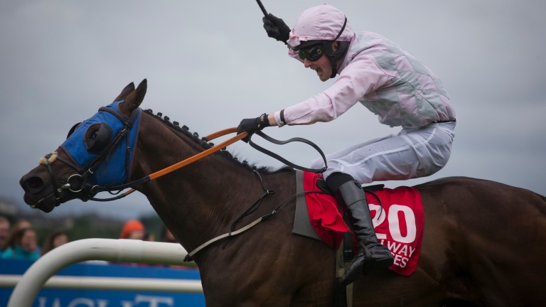 Swamp Fox: finished second in the Galway Hurdle last month