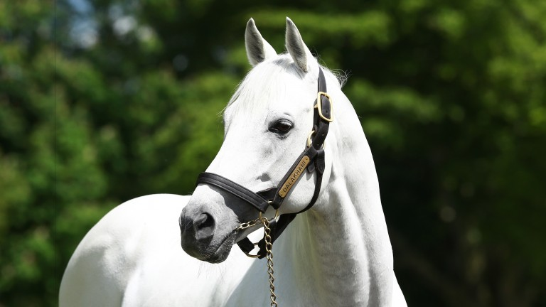 Dalakhani: is the sire of Clongiffen's new recruit Shakeel