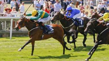 Illuminate: daughter of Zoffany will join blue-blooded broodmare band at Denford Stud