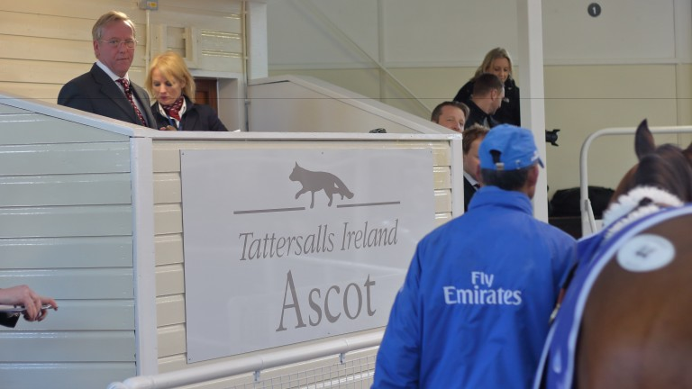 Tattersalls Ireland Ascot: auction takes place on December 5