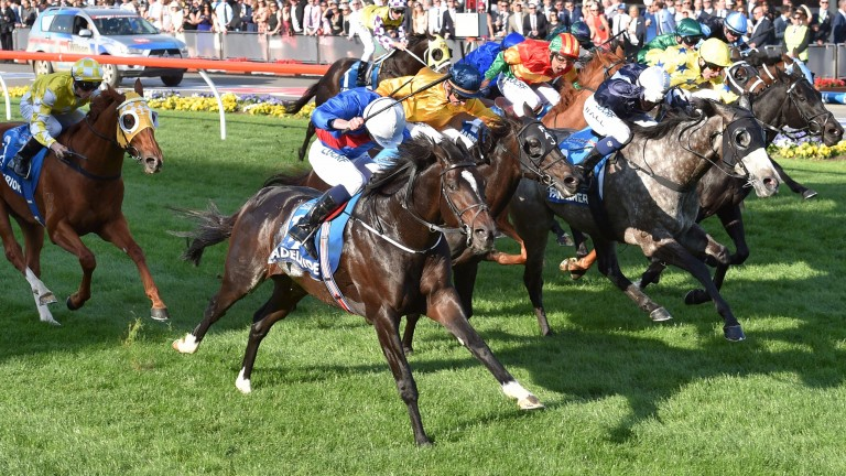 Adelaide (white cap, near): gave Aidan O'Brien his first Group 1 victory in Australia by winning the Cox Plate in 2014
