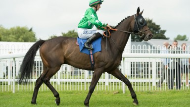 Jonnie Skull: only the fourth horse ever to reach 200 starts in Britain
