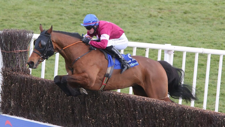 Rogue Angel: is likely to go to the sales along with fellow Irish Grand National winner Thunder And Roses