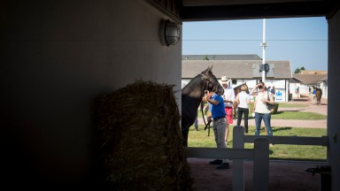 Overall figures at the Arqana August Yearling Sale were down on last year but buoyant nonetheless