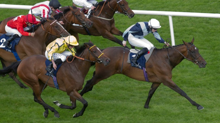 Billy Lee and Fiesolana land the 2014 Group 1 Matron Stakes at Leopardstown