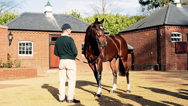 Frankel: set to be supported with a strong set of Juddmonte mares again this year