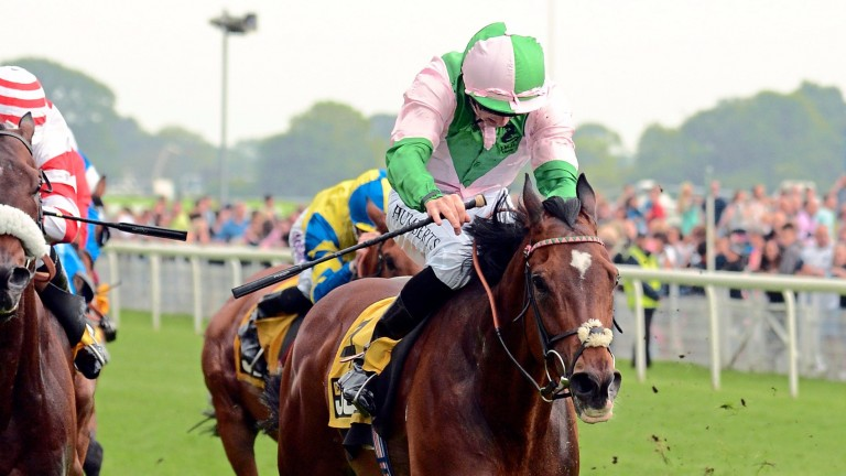 Jallota: bidding for a repeat success in the Prix du Pin