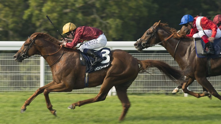 Lightning Spear: showed his true potential at Goodwood