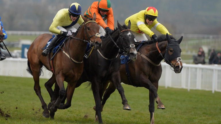 Ibis Du Rheu (right) won the Martin Pipe Handicap Hurdle at the 2016 Cheltenham Festival