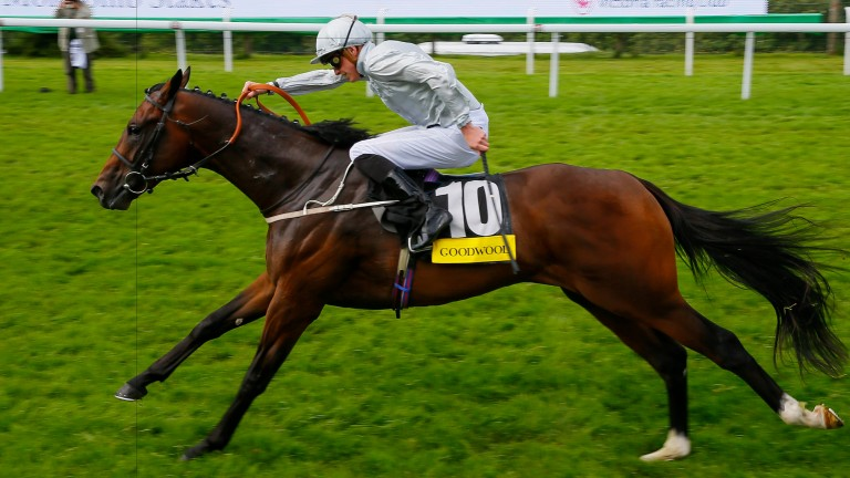 Yalta: the Molecomb Stakes winner is out of two-year-old winner Lacily